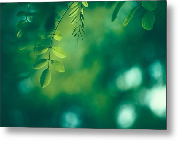 Leaf Background Metal Print by Jasmina007