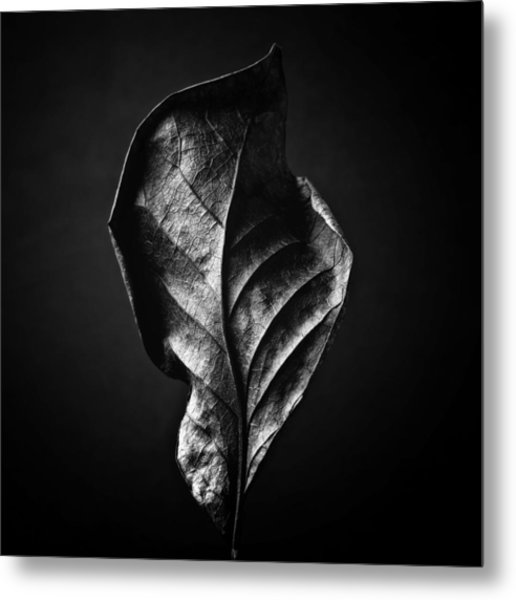 Black And White Nature Still Life Art Work Photography Metal Print