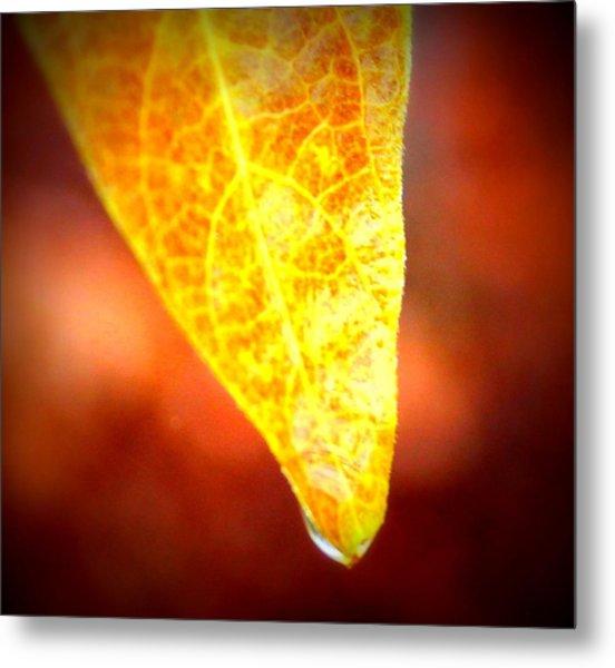 Leaf Drop Metal Print