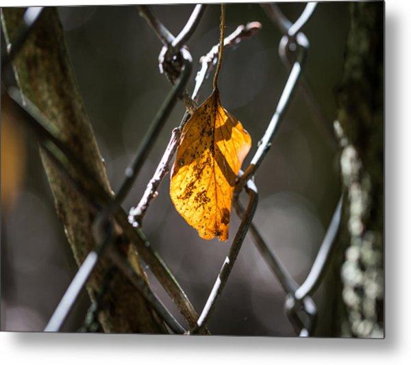 Leaf. Metal Print