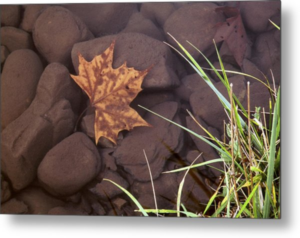 Leaf In The Mountain Fork River Metal Print