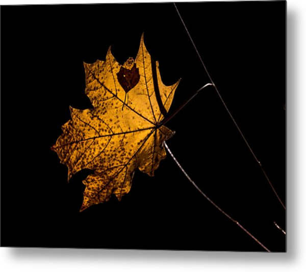 Metal Print featuring the photograph Leaf Leaf by Leif Sohlman