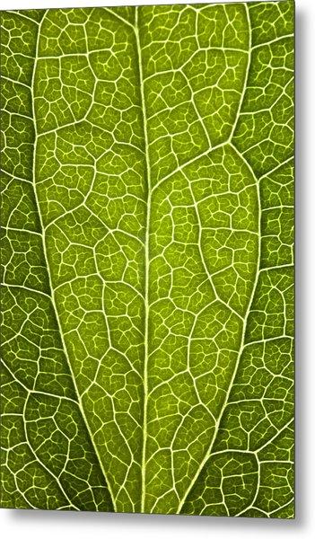 Leaf Lines V Metal Print by Natalie Kinnear