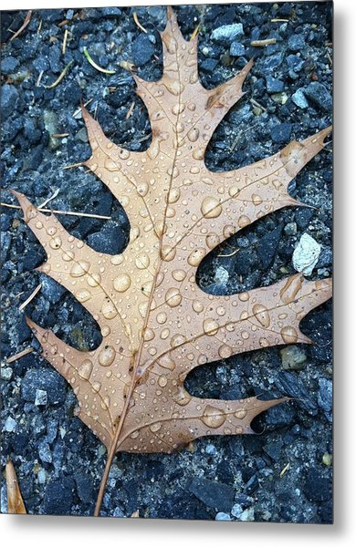 Leaf Metal Print by Michelle Simard