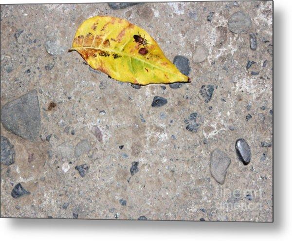 Leaf Of Life Metal Print