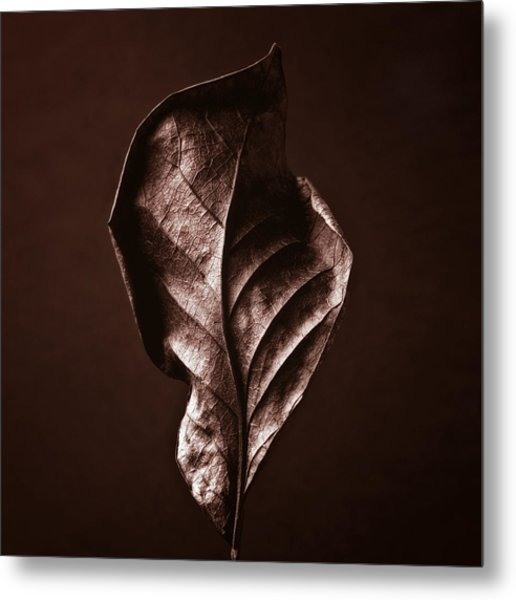 Copper Gold Red Brown Nature Still Life Art Work Photograph Metal Print