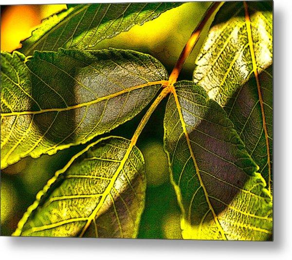 Leaf Texture Metal Print
