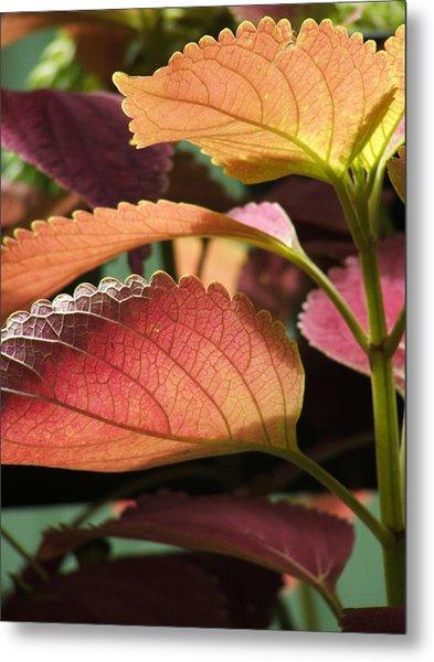 Leafy Plant Metal Print by Nelson Watkins