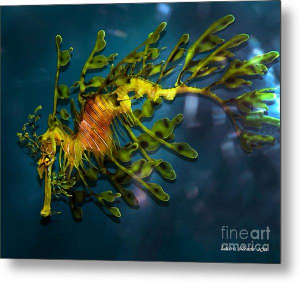 Leafy Sea Dragon Metal Print