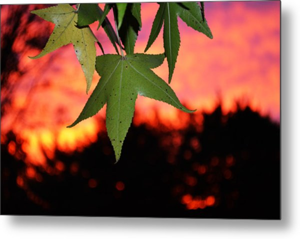 Leafy Sunset Metal Print by Sabre Tooth