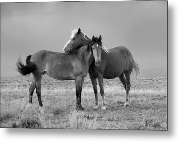 Lean On Me B And W Wild Mustang Metal Print