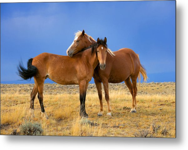 Lean On Me Wild Mustang Metal Print