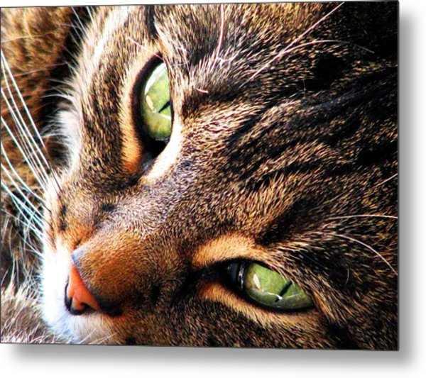 Learn To Linger Metal Print