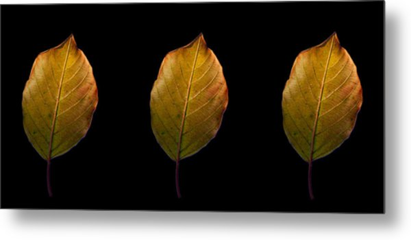 Leaves - A Golden Trio Metal Print by James Hammen