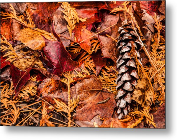 Leaves And Pine Cones Metal Print