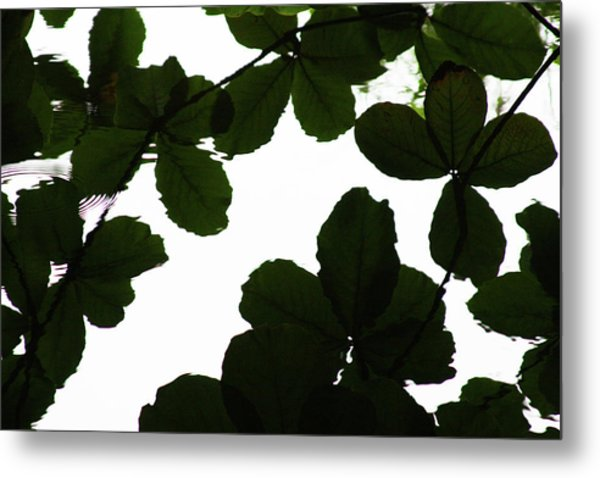 Leaves Drifting Metal Print by James Knight