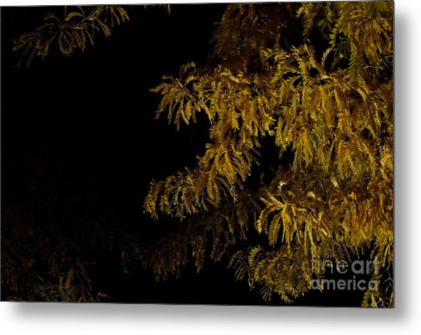 Leaves In The Night I Metal Print by Phil Dionne