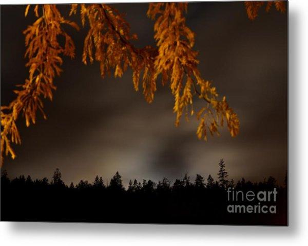 Leaves In The Night II Metal Print by Phil Dionne