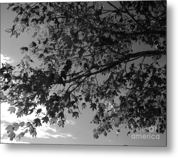 Metal Print featuring the photograph Leaves On A Tree by Laura  Wong-Rose