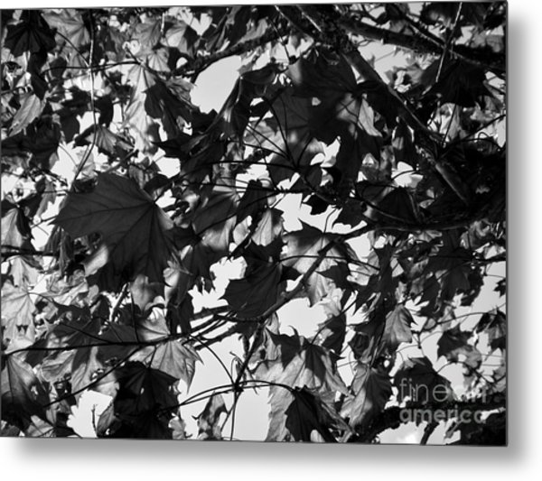 Metal Print featuring the photograph Leaves On A Tree Ll by Laura  Wong-Rose