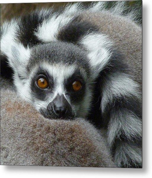 Lemur Leisure Time Metal Print