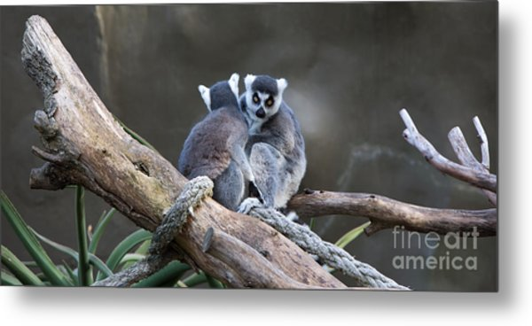 Lemur's Metal Print by Shannon Rogers