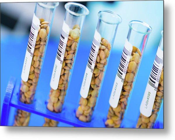 Lentil Samples In Test Tubes Metal Print