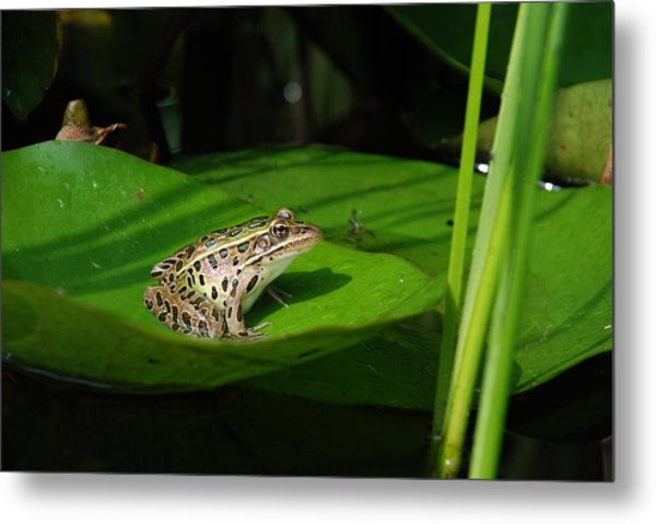 Leopard And Lily Metal Print