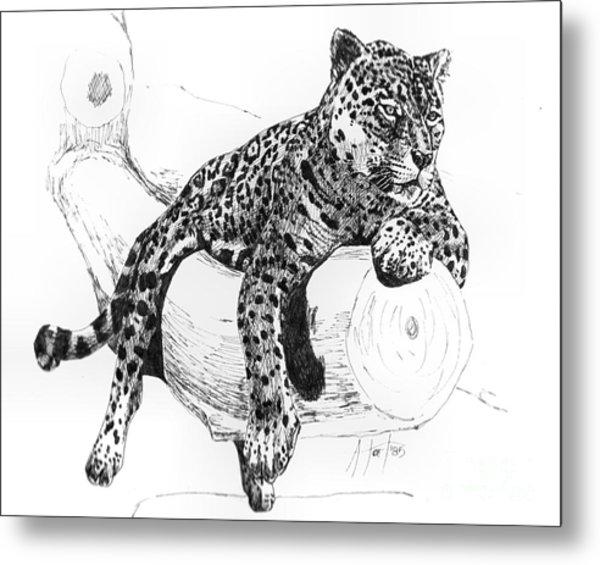 Leopard At Rest  Metal Print