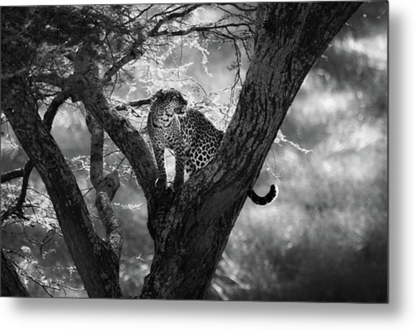 Leopard Metal Print by Bjorn Persson