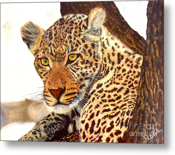 Leopard Point Of View Metal Print