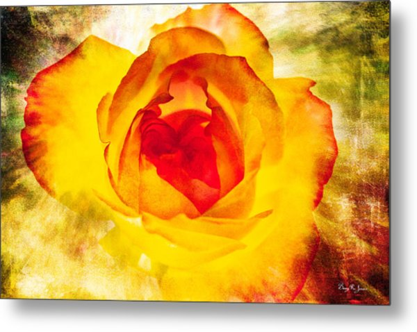 Floral - Rose - Let It Shine Metal Print by Barry Jones