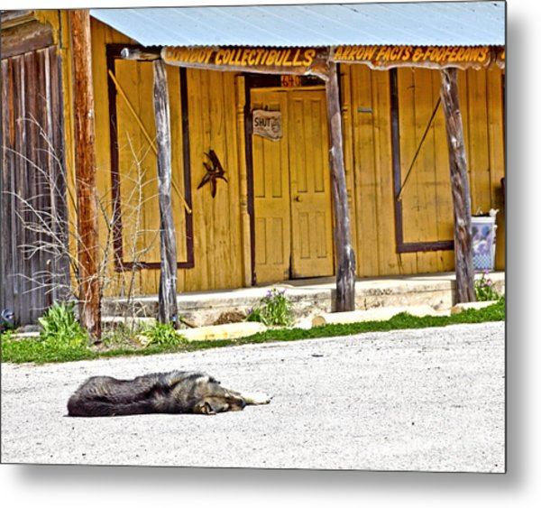 Let Sleeping Dogs Lie Metal Print by Pattie Calfy