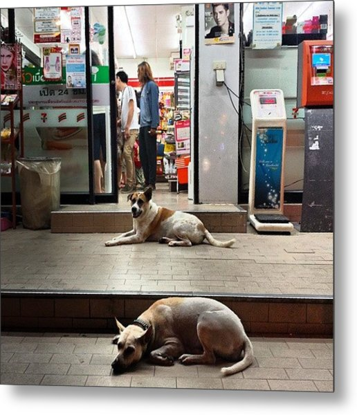 Metal Print featuring the photograph Let Sleeping Dogs Lie Where They May by Mr Photojimsf