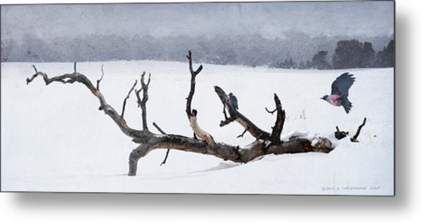Letting Go  -  Lewis Woodpeckers Metal Print by R christopher Vest