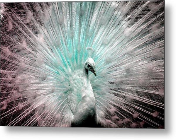Leucistic White Peacock Metal Print