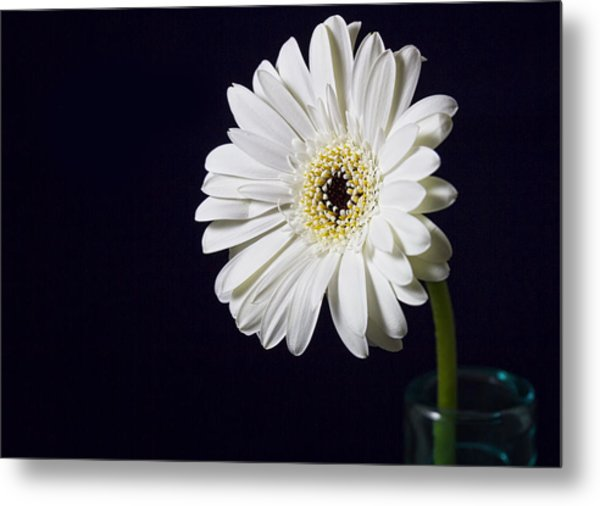 Life -  Face On Metal Print by Kim Andelkovic