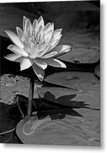 Light And Shadow Metal Print