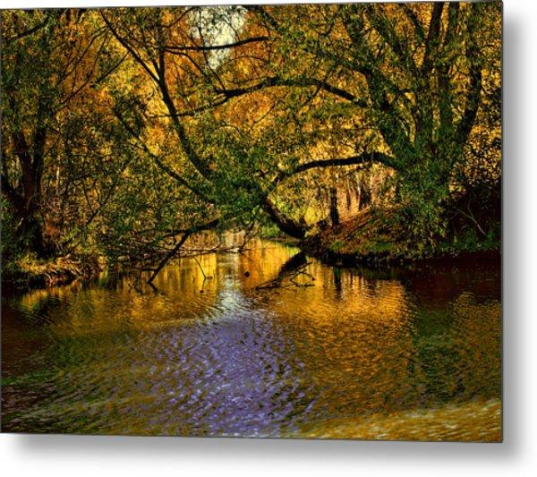 Metal Print featuring the photograph Light In The Trees by Leif Sohlman
