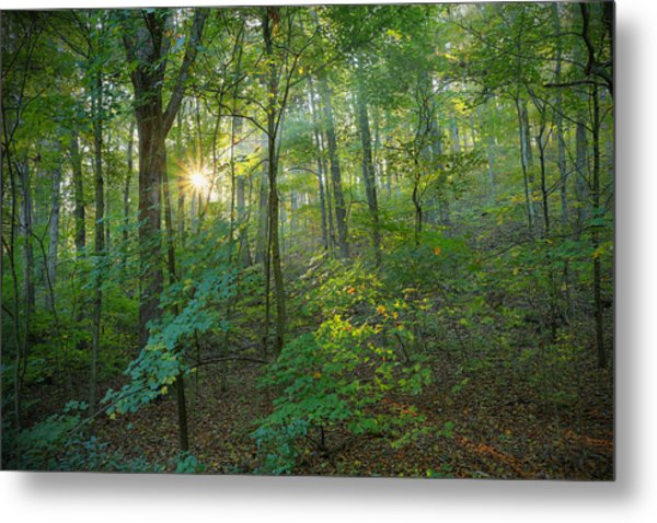 Light Up The Forest Metal Print