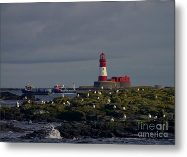 Lighthouse On The Farne Isands Northumberland Metal Print