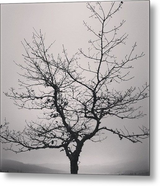 Lightness Tree Metal Print