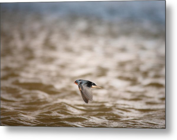 Like A Flying Jet.. Metal Print