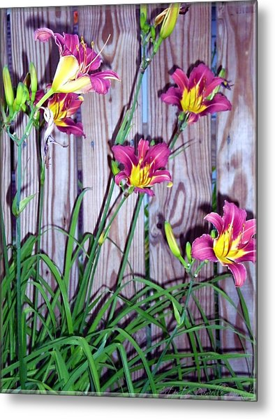 Lilies Against The Wooden Fence Metal Print