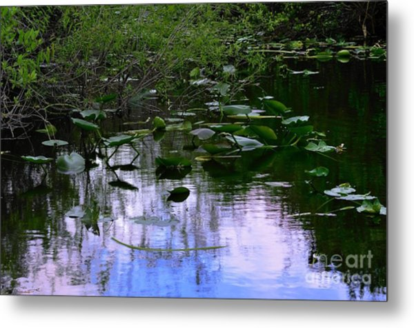 Lilies  Metal Print by Andres LaBrada