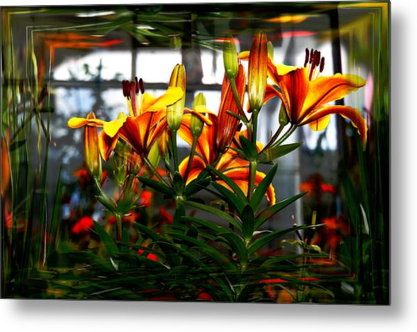 Lilium Metal Print by Nigel Watts