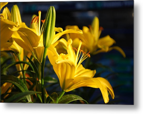 Lillies Of Gold Metal Print by Billie Colson