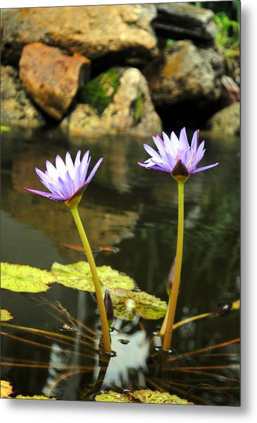 Lillies Of The Pond Metal Print