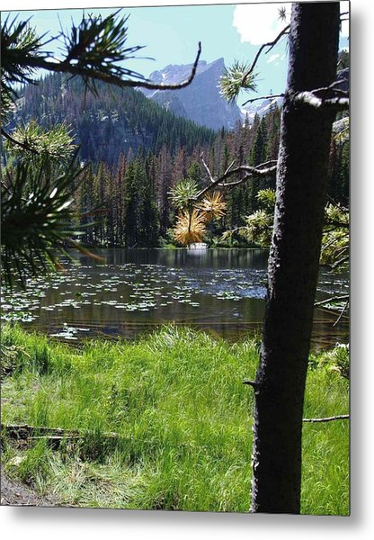 Lilly Lake Metal Print by Stephen Schaps