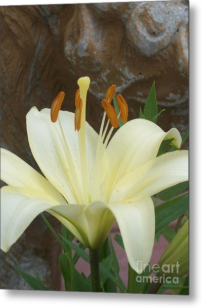 Lily And Rock Metal Print by Wide Awake Arts